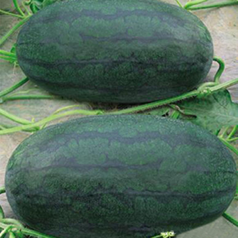 are black watermelon seeds edible