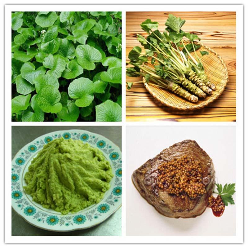 100 200pcs lot wasabi seeds japanese horseradish seed. Black Bedroom Furniture Sets. Home Design Ideas