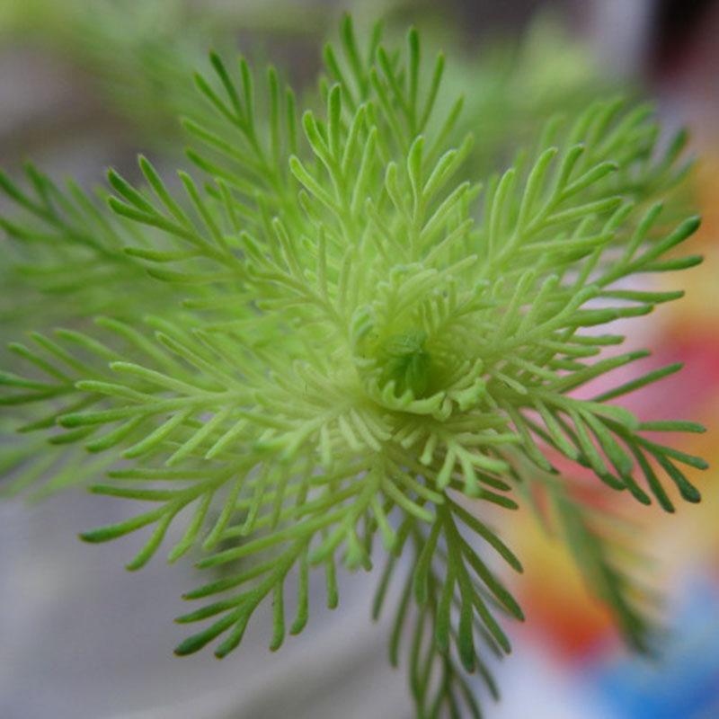1000pcs Aquarium Tank Mixed Grass Seed Water Aquatic Plant Seeds Decorations