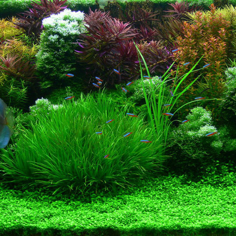 Aquarium plants seeds 20 kinds aquarium grass seeds for Pond grass plants