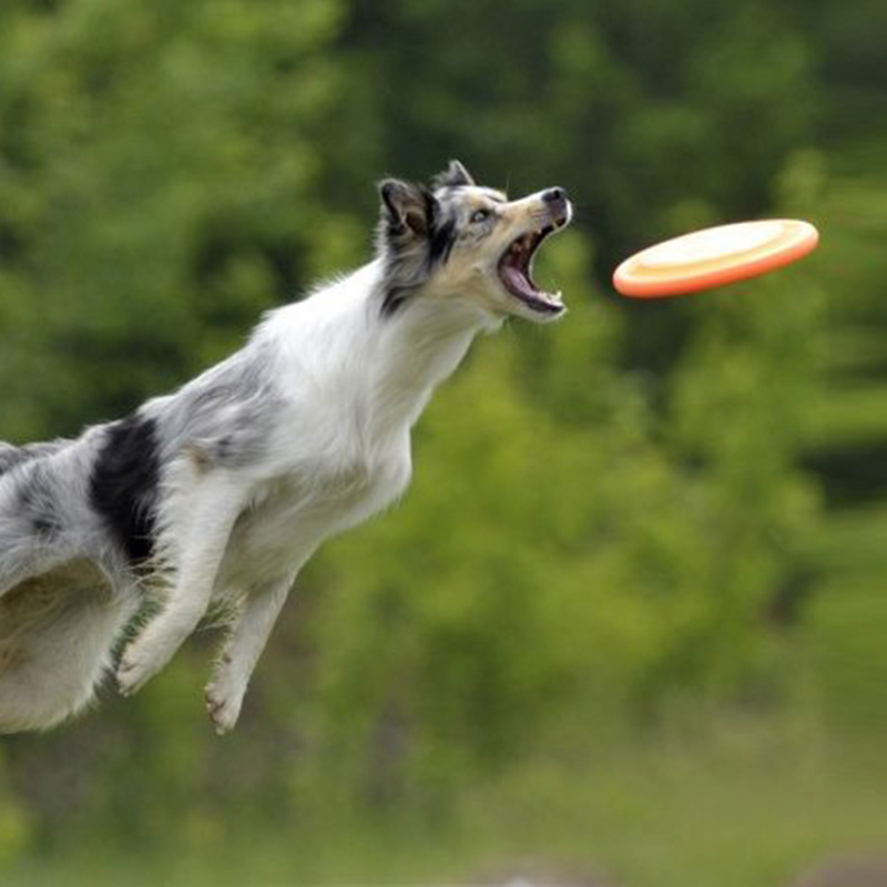 how to train a dog to fetch a frisbee