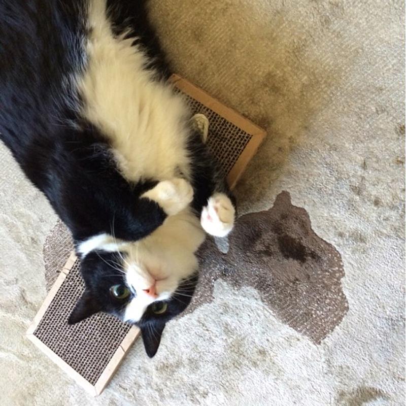 Pet Cat Scratching Board Scratcher Mat Post Pole Bed Pad