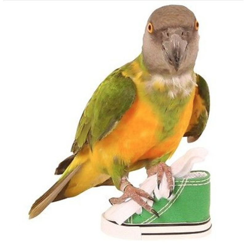Parrot Foot Toys 75