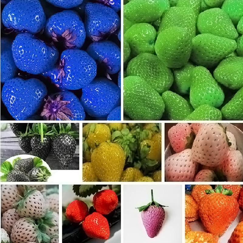 500Pcs Süßkartoffel Samen Garten Köstliche Frische Obst Gemüse Pflanzen Saatgut