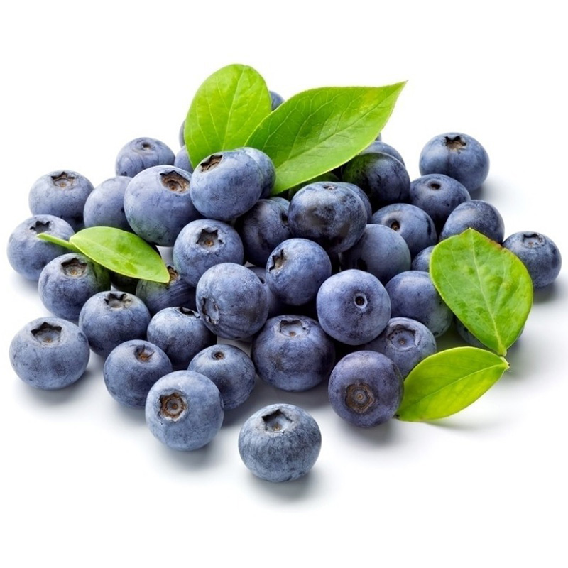 Blaubeere leckere Früchte Wal NEW 30 Heidelbeere Samen Vaccinium myrtillus