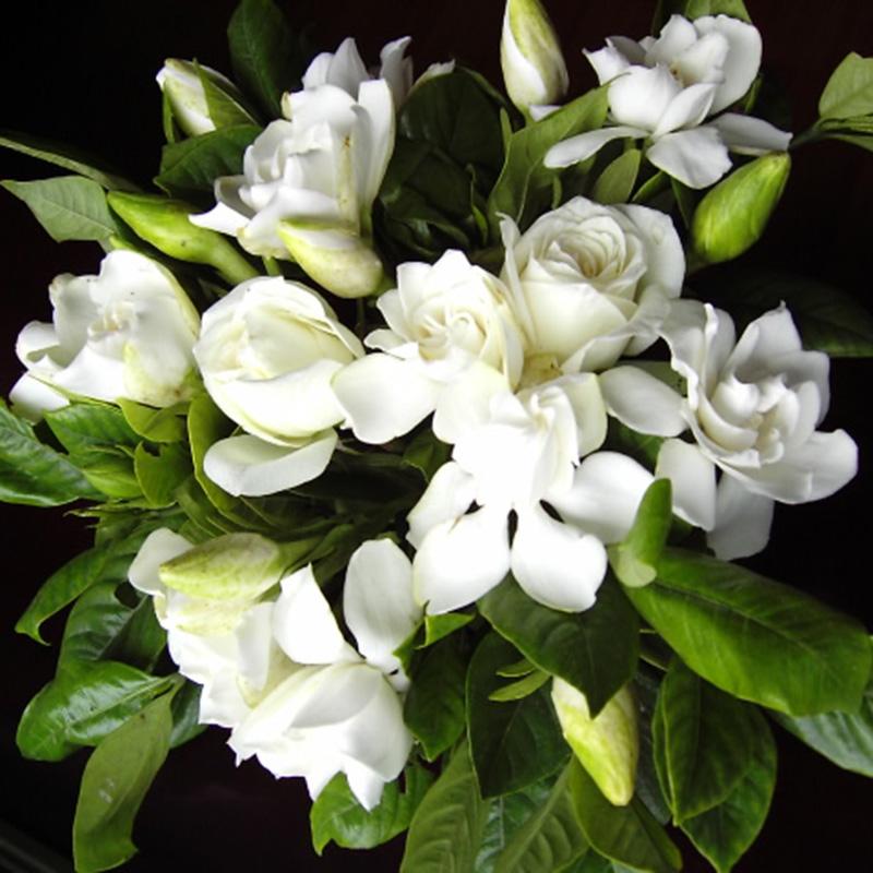100pcs Gardenia CAPE JASMINE Jasminiodes White Shrub Flower Plant Garden R3Z4