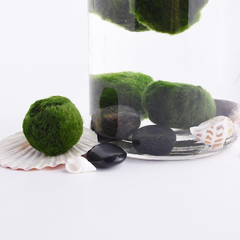 New marimo moss balls live aquarium plant algae fish for Moss balls for fish tanks