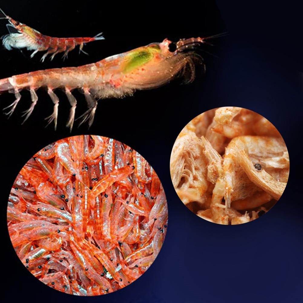 Cichlid Turtle Flowerhorn Carnivore Fish Food Freeze Dried ...