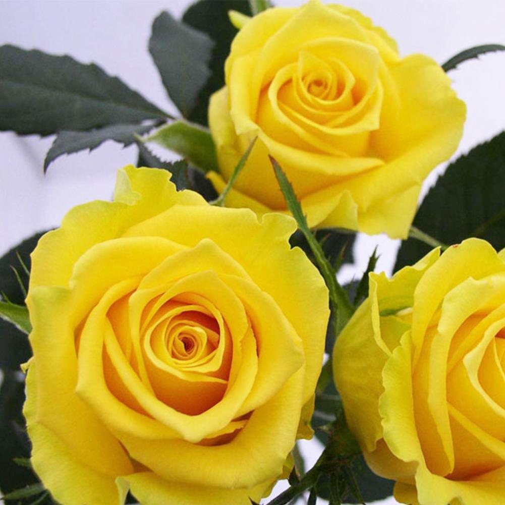 200stk gemischte Stil seltene Pflanzen Multi Farben Rose Pfingstrose,Blumen P4M2