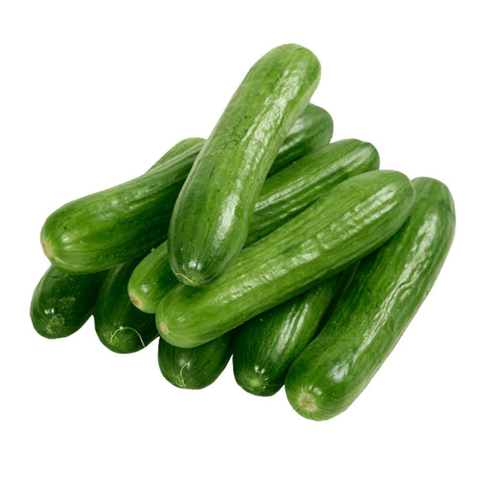 60stk Samen·Salatgurke Perfection Gurke Schlangengurke Gurken Gurkensamen!
