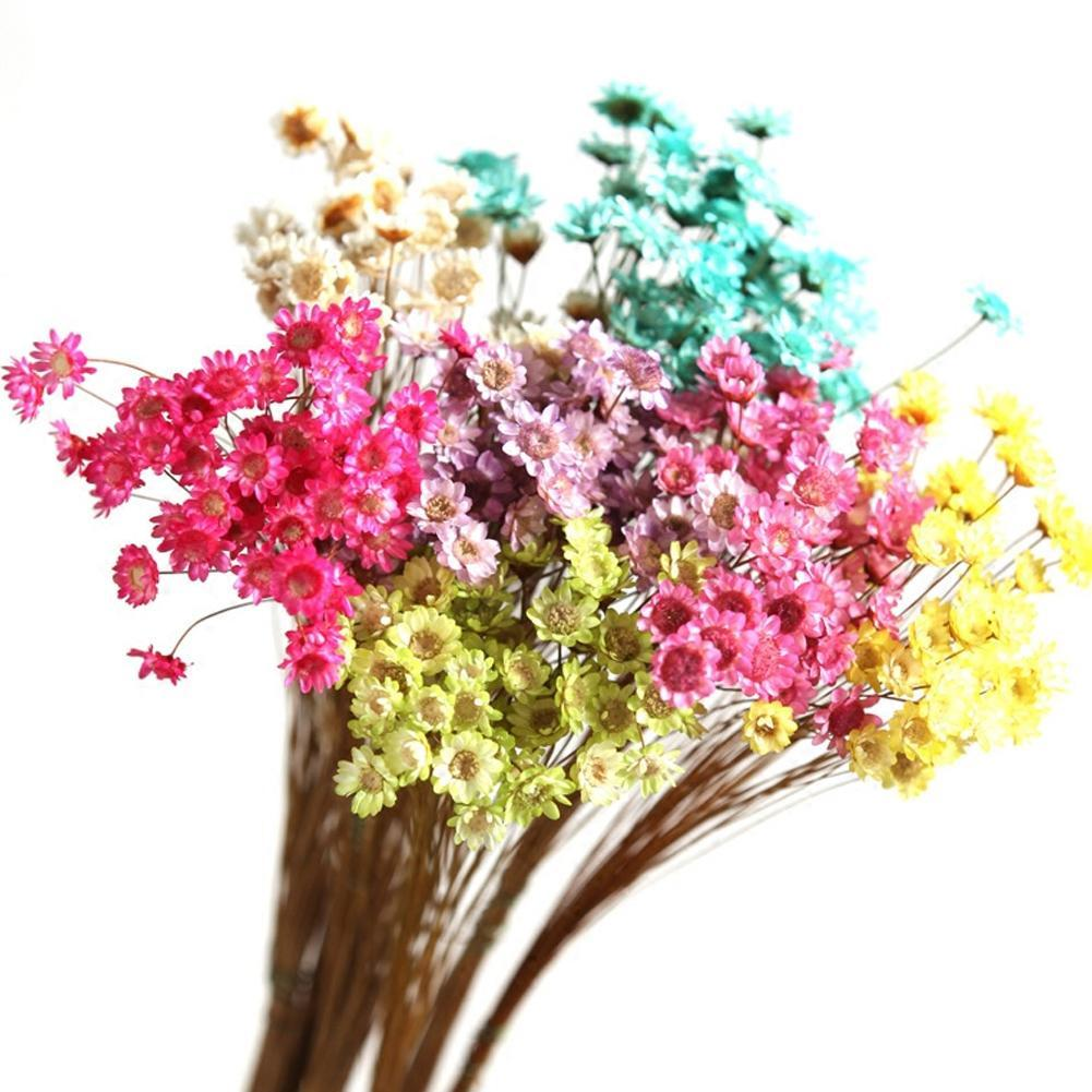 Pressed Bunch of Flowers with Branches Real Natural Dried Rare ...