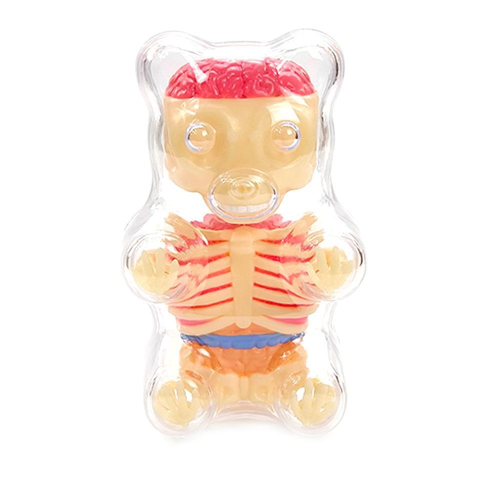 Gummi Bear Skeleton Anatomy Model Kit, Clear new | eBay