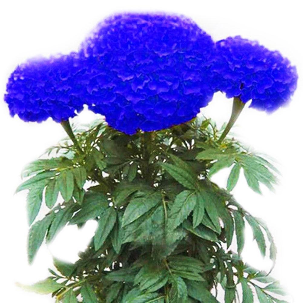 1200 stk Spike Blumensamen Samen Obst Gemüse Blume Haus Pflanzen