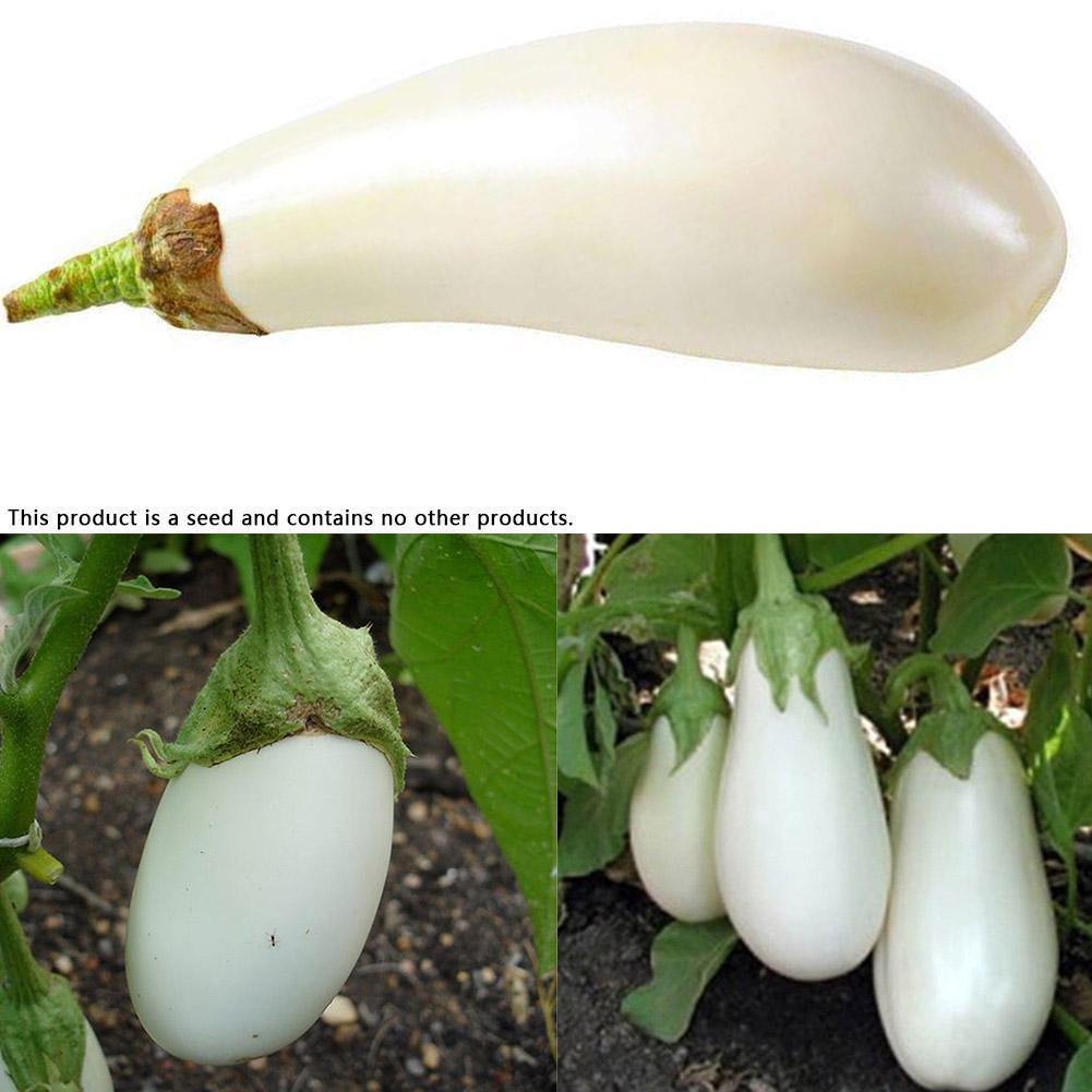 40 Pcs White Eggplant Seeds Fresh Vegetables Seeds Home Groden  Decoration