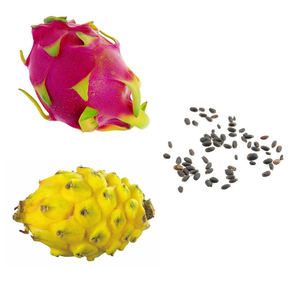 200 Samen 4 Arten Mix Drachenfrucht Gelber Samen Duftender Kaktus Selten Ex N0E1