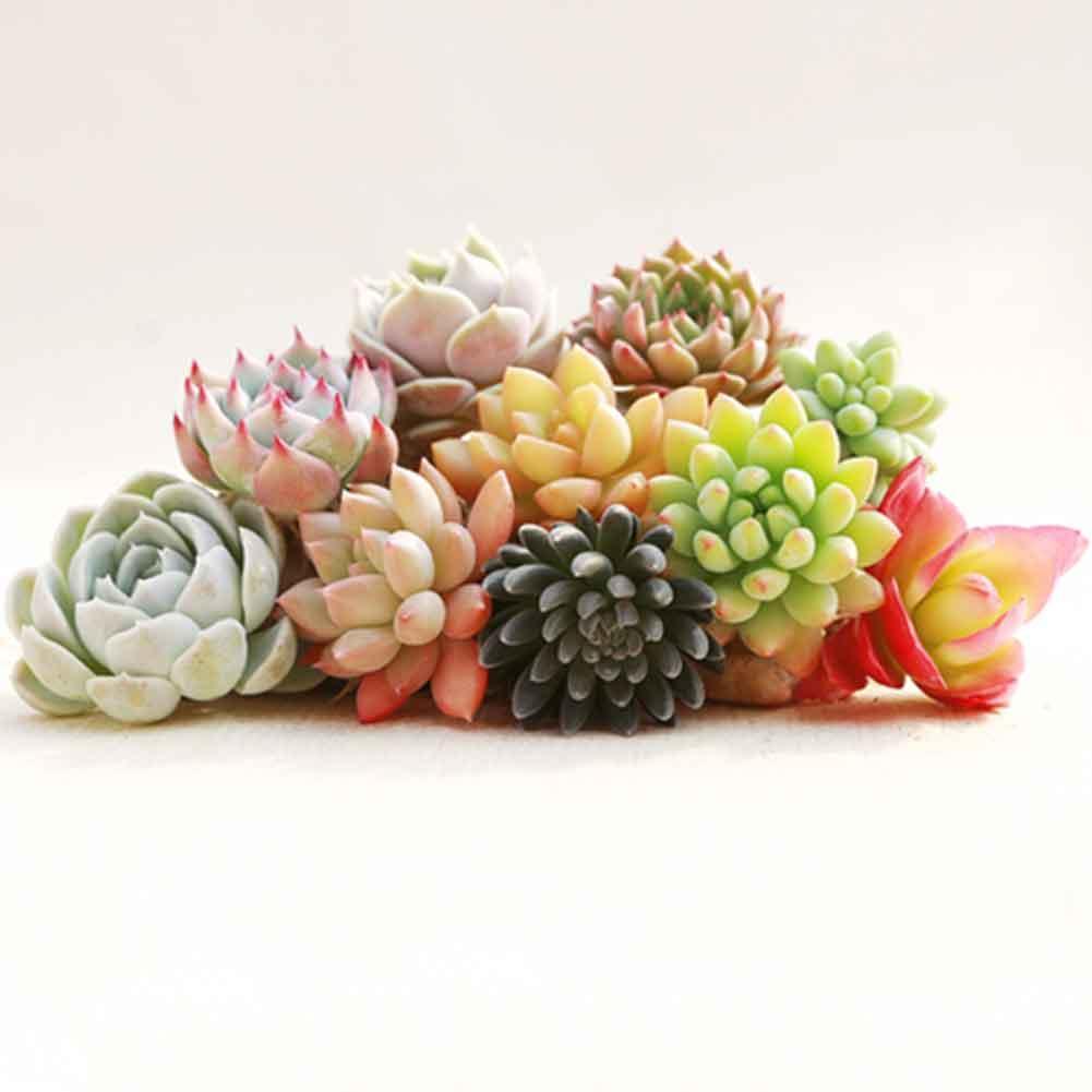 300 Teile beutel Mix Sukkulenten Samen Lotus Bonsai Pflanzen Samen·Neu