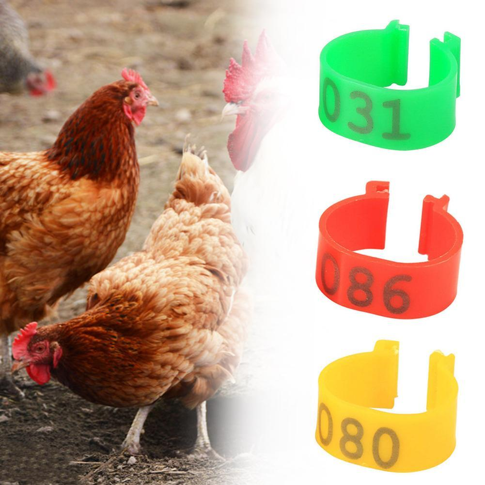100X 16mm Clip On Leg Band Rings for Chickens Ducks Hens Poultry Large FowRKUS